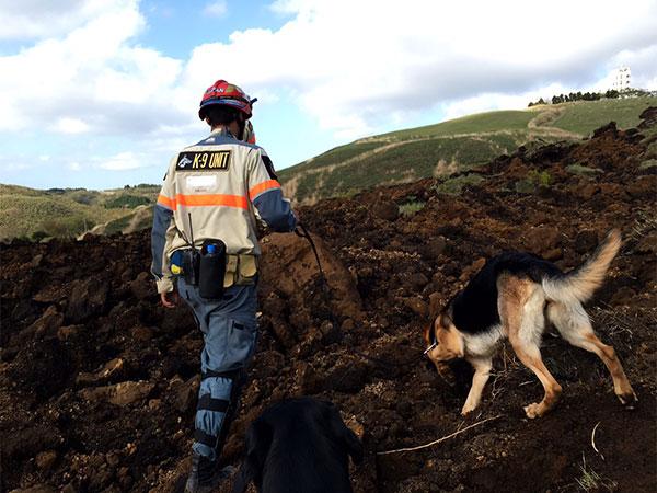 災害救助犬(レスキュードッグ)の育成・派遣