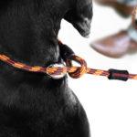 leash-9